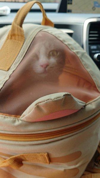 保護猫ちゃんが元気になりました。